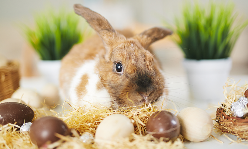Channel the Easter Bunny's Productivity